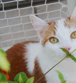 Ungiftige Pflanzen Terasse Katze