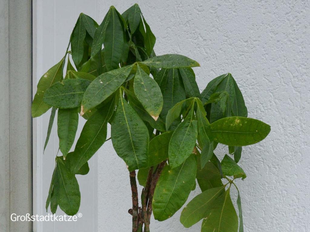 Terassenpflanzen7-1024x768