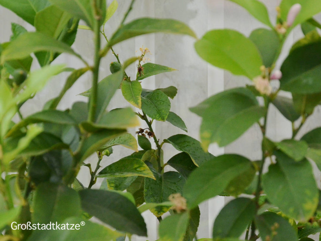 Terassenpflanzen8-1024x768