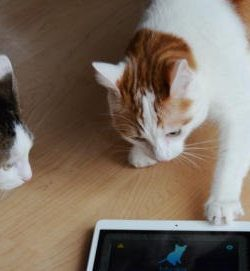 Mensch-Katze-Übersetzer | App | Katzensprache | Katze verstehen