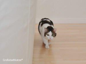 Wenn die Katze ihre fünf Minuten hat | Katze dreht ab | Katzenverhalten