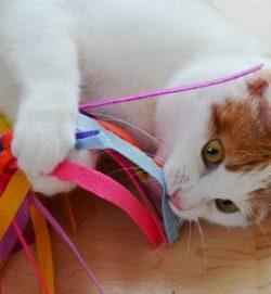 DIY Katzenspielzeug | DIY Spinne | Hack Katzenspielzeug Spinne