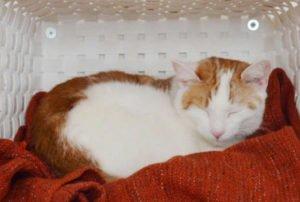 Lifehack: Katzen-Wand-Bettchen