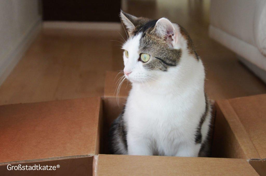 Alltag mit Katzen | Mit Katzen leben | Katzen sind toll