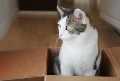 Katze Lifehack DIY: Intelligenzspiel | Fummelspiel ohne Kleben