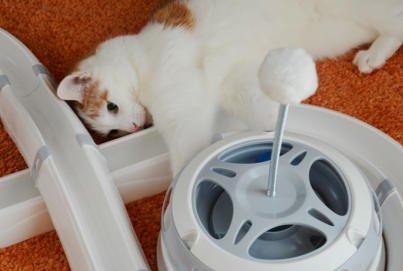 Katzenkarussel Flashlight | Erweiterung Katzen Spielschiene Flashlight