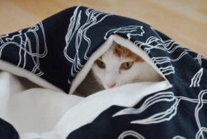 Lifehack: Kissenbett mit Decke