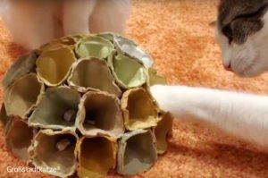 Lifehack: Fummelspiel aus Eierverpackungen | DIY Katze | DIY Cat