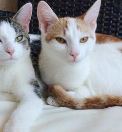 Bevor die Katzen einziehen   Zusammenleben mit Katzen