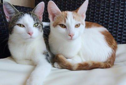 Bevor die Katzen einziehen | Zusammenleben mit Katzen