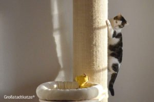 Zeitlupenkünste | Katze kommt Kratzbaum nicht hoch | XXL Kratzbaum