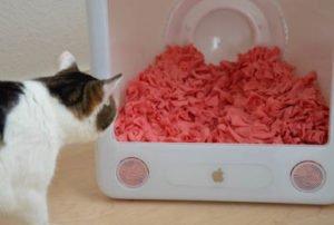 Ratgeber Lifehacks Katze