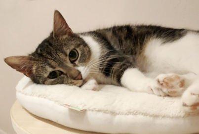 Katzen leben nebeneinander | Katzen kuscheln nicht | Katzen spielen nicht