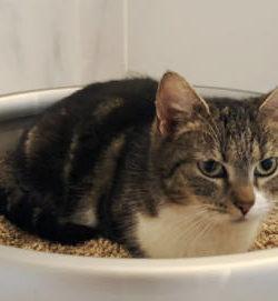 Zusammenführung Katzen | Neue Katze nach Tod | Katzen befreunden