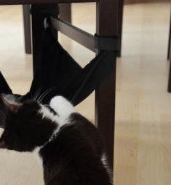 Hängematte Stuhl Katze | Stuhlhängematte | Katzenhängematte