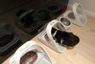 Katze Kitten aus dem Tierheim | Katzen Zusammenführung