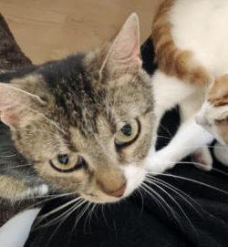 Katze nach OP versorgen