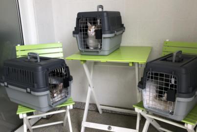 Drei Katzen Zusammenführung | Drei Katzen besser als zwei Katzen