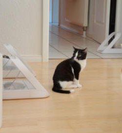 Katzen Zusammenführung | Tipps Katzenzusammenführung
