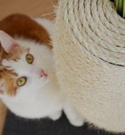 Lifehack: Kratzvase | DIY Katze | DIY Kratzmöbel | Katzenzubehör