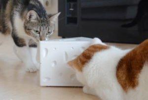 PetSafe FroliCat Katzenspielzeug Cheese