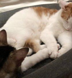 TRIXIE Bett Tamio | Großes Bett für Katzen | TRIXIE Katzenbett