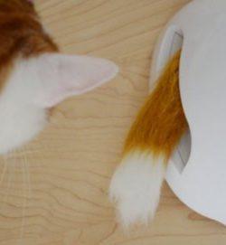 Katzenspielzeug Fuchsbau Beitragsbild
