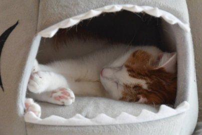 Lieblingsplätze: Kuschelplätze für Katzen | Favoriten der Großstadtkatzen