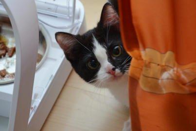 Kitten Beitragsbild