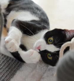 TRIXIE Kratzmatte mit Spielzeugen am Band | Kratzmatte für Kitten