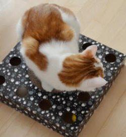 Katzenspielzeug Kratzpappe mit Ball von TRIXIE | Pappspielzeug Katzen