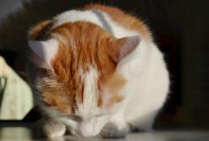 Katze frisst Tablette nicht