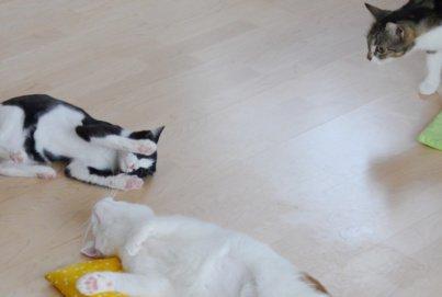 Katzenzusammenführung: Spielen, Spielen, Spielen! | Katzenspielzeug