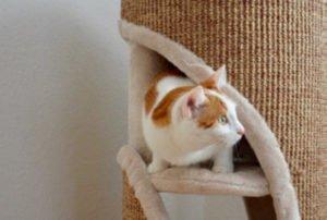 CAT TOWER Ranking: Platz Zwei