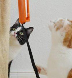 Katzenspielzeug Fling-Ama-String Beitragsbild