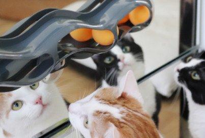KOBWA Katze Sauger Fenster Trackball Beitragsbild