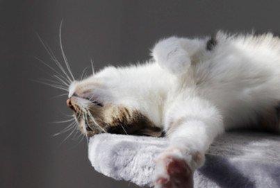 Katze sonnt sich Beitragsbild