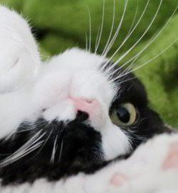 KatzenapothekeBeitragsbild
