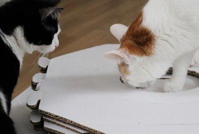 MiauModul | Katzenwürfel | Designer Katzenzubehör | Katzeninterieur