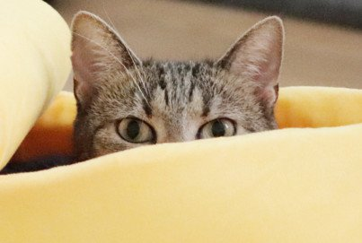 Alles Banane!? | Witzige Katzenbettchen | Bananen-Bett für Katzen