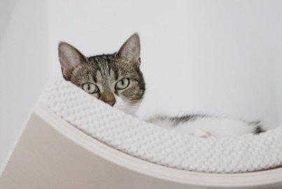 COSY AND DOZY Wandliege | Katzenlige für die Wand | Wandliege