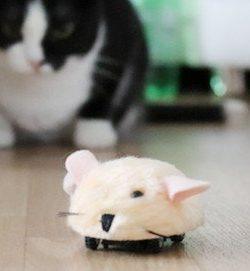 Micro Mouse Zooplus | Katzenspielzeug Fernsteuerung | Spielzeug Maus