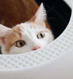 Katzentoilette Luiz Top Entry | Katze macht daneben | Katze trifft Klo nicht