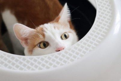 Katzenklo-Typ