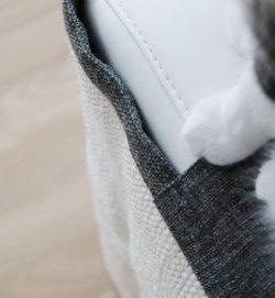 Kratzschutz Couch Beitragsbild