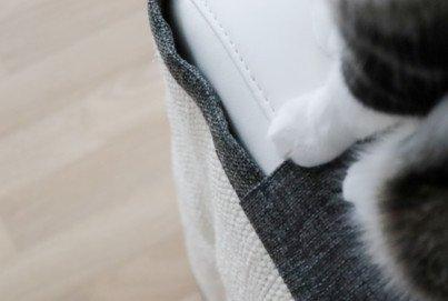 Katze kratzt am Sofa