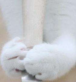 Premium Katzenstreuschaufel XXL | Beste Schaufel Katzenklo