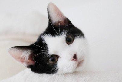 Katzenversicherung PETPROTECT