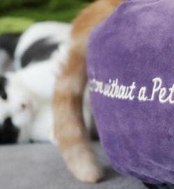 TRIXIE Bett Pet's Home | TRIXIE Kuschelhöhle Kaline | Kuschelbett Katze