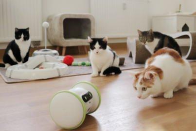VARRAM Haustier-Fitness-Roboter | Spielzeugroboter Katze
